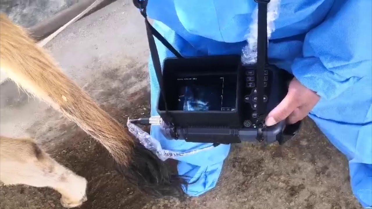Get Better Imaging - Affordable ECO-12Vet Handheld Ultrasound Machine From KeeboMed | Details & More