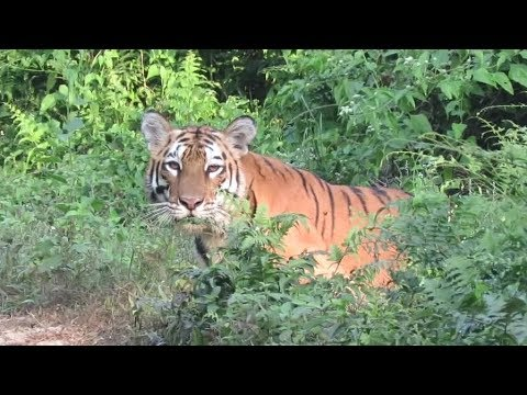 Essay on Manas National Park