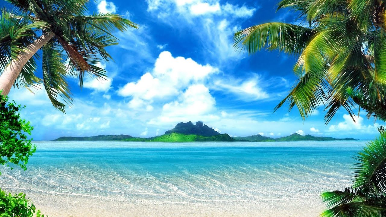 Tropical island music palm tree beach youtube tropical island music palm tree beach voltagebd Image collections