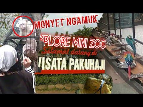 explore-mini-zoo-paku-haji-part-1-||-ketemu-king-cobra-dan-monkey-dance