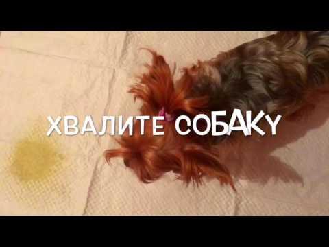 Как ПРИУЧИТЬ собаку к ТУАЛЕТУ?|Советы собачникам