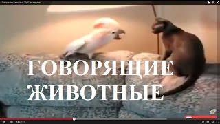 Говорящие животные  2015.Эксклюзив.