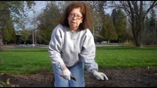 Gardening tips: Pruning Hellebores