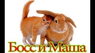 Кролик и Кот в Домашних Условиях