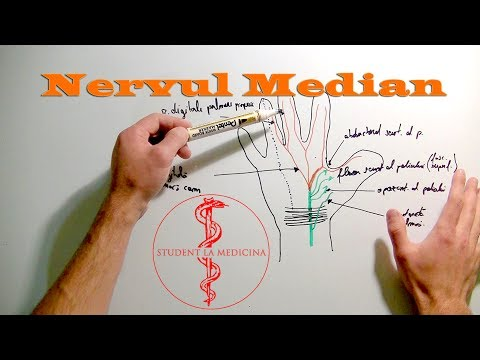 Nervul Median
