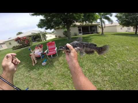 Catfish Fishing With Hotdogs