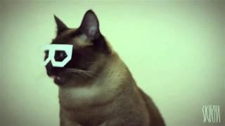 Бешанный кот