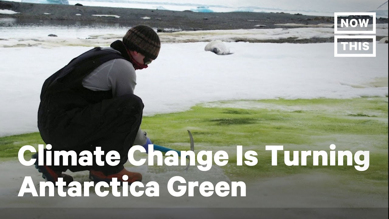 Climate Change Is Turning Antarctica Green | NowThis - NowThis News