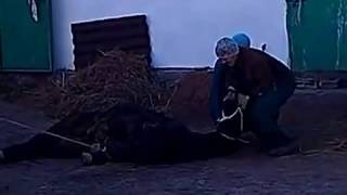 Как правильно начинать резать коня(Кони́на — мясо лошадей при употреблении в пищу. Обычно потребляется мясо подросших жеребят и совсем молод..., 2013-11-15T15:06:50.000Z)