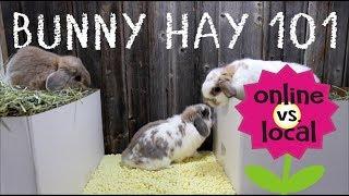 Rabbit Hay Taste Test - Small Pet Select vs. Local Hay