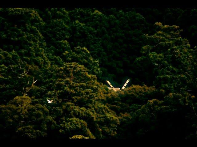 これが伊勢神宮だ!映画『うみやまあひだ ~伊勢神宮の森から響くメッセージ~』予告編