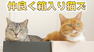 cute cats relaxing in the boxes