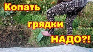 Копать или не копать грядки,вот в чем вопрос !