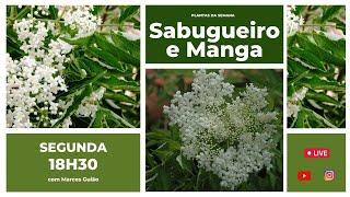 Conversando sobre Plantas Medicinais com Marcos Guião: Sabugueiro e Manga