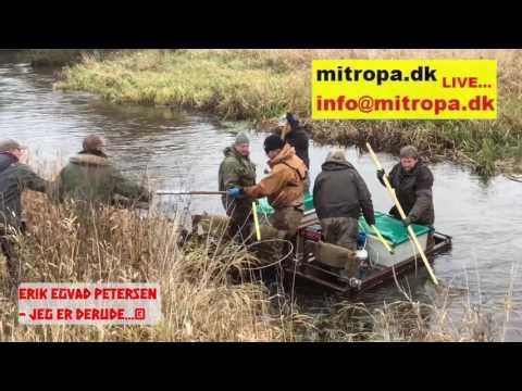 El-fiskeri i Vidå-systemet 2016