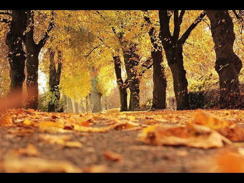 2 Hours Autumn Instrumental Music  Relaxing  Piano  HQ 320kbps