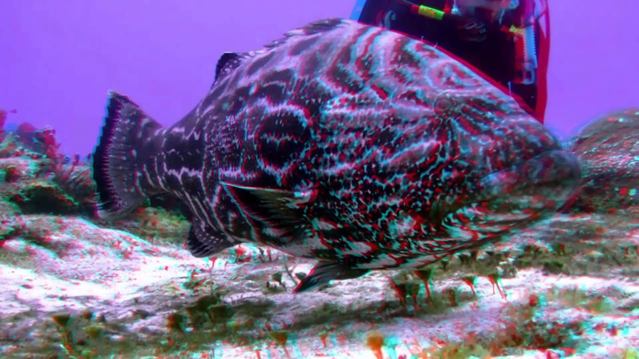 3d Fish Wallpaper Hd 3d Action Video S Quot Big Fish Quot Anaglyph Movie Youtube