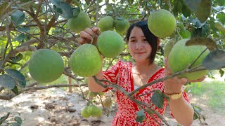 Pomelo In My Village | Picking Pomelo Fruit For Eating | Sros Yummy Cooking Vlogs