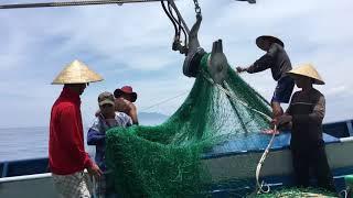 Tàu cá nghề lưới rê