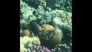 Шарм эль Шейх 2021 обитатели Красного моря Red Sea Подводный мир
