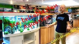 Die beliebtesten Aquarien für dein Zuhause - Einrichtung Teil 1