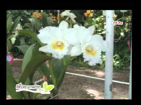 รายการเพื่อคุณภาพชีวิต วันเสาร์ที่ 24 ส.ค.2556 งานประกวดไม้ดอกไม้ประดับสวนสมเด็จพระนางเจ้าสิริกิติ์