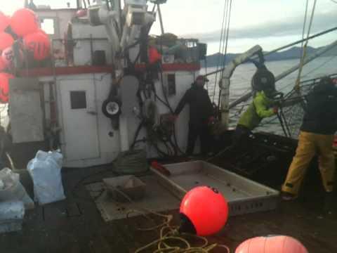 Kodiaks Fall Cod Fishery