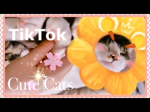 『TikTok面白かわいい猫動画集』 Funny cute cat videos Compilation by TikTok