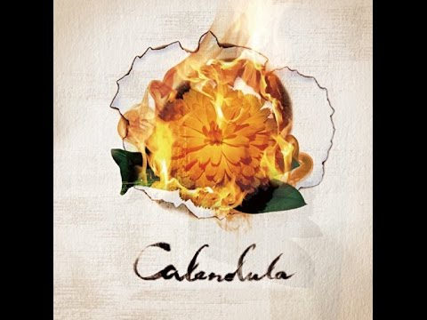 a crowd of rebellion - Calendula