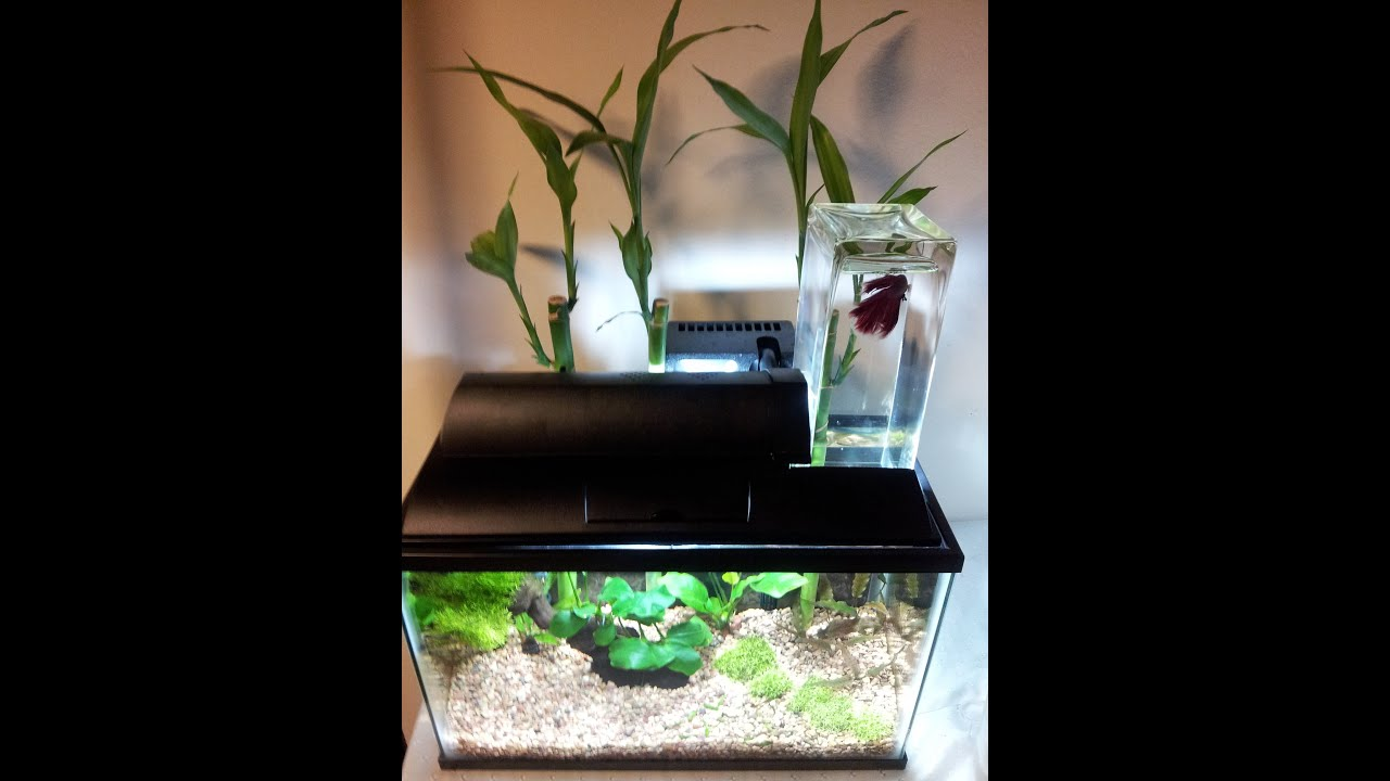 Planted inverted betta tank youtube planted inverted betta tank reviewsmspy