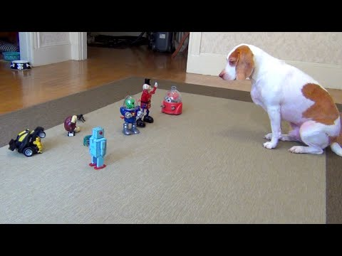 Dog vs. Robot Army: Cute Dog Maymo