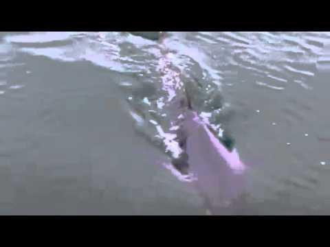 Bluefin tuna off Devon! by Alan Steer