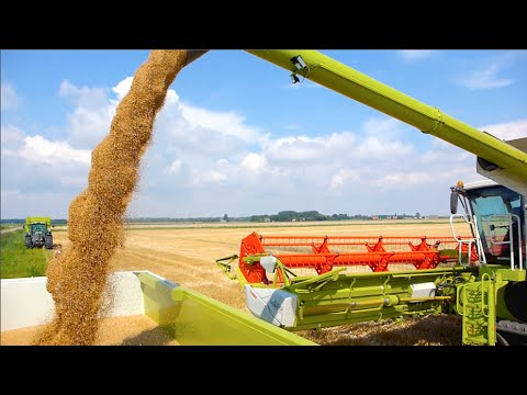 Claas Lexion 780 TT | Challenger MT765D | Terberg 10x4 | Wheat Harvest '14 - Veerman Goudswaard