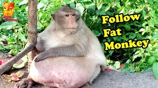 The Follow Fat Monkey