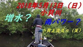 久々に小貝川上流に浮いてきました♪ 中、上流エリアは代掻きの影響あり...