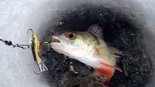 Зимняя рыбалка на окуня по первому льду на мормышку,балансир!.
