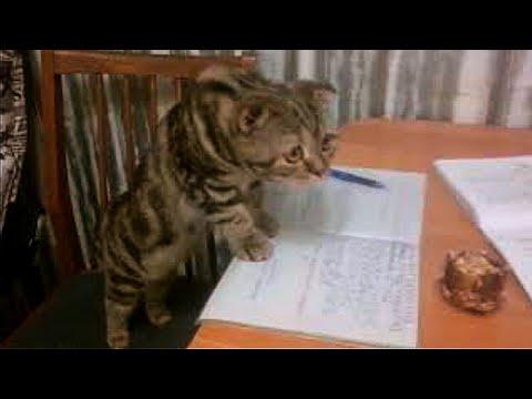 !Приколы с котами | Котёнок помогает делать уроки!!!