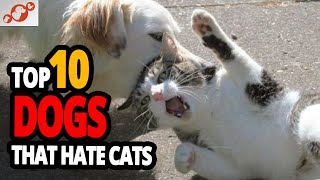 Worst Dogs For Cats  TOP 10 Dog Breeds That Hate Cats!