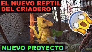 El nuevo REPTIL del criadero =) MARIO BLOGS