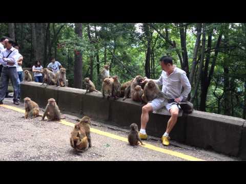 Man Feeding Monkeys, Qianling Park, Guiyang, China