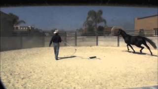 Warwick Schiller starting a Warmblood stallion part 1