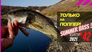 Если ловить басса только на поппер летом Рыбалка на Кипре Часть 42 Сезон 2021