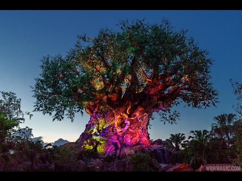 Tree of Life Awakenings at Disney's Animal Kingdom