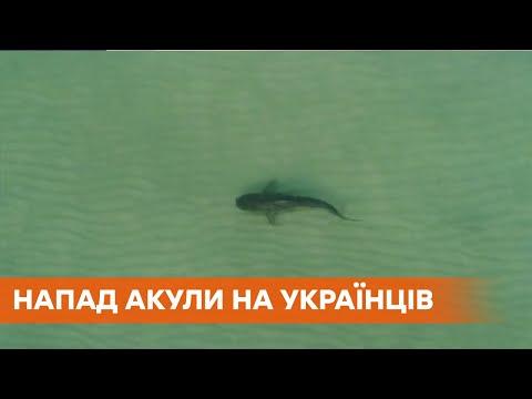 В Египте акула напала на украинскую семью