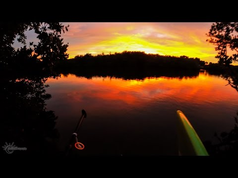 Paddle Board into the sunset