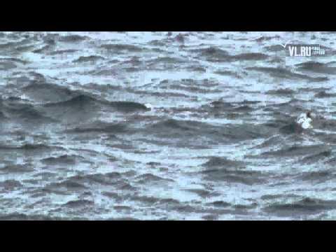 VL Ru   На мысе Эгершельд вновь появились тюлени Владивосток