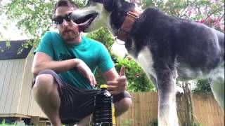 Sending your dog around an object
