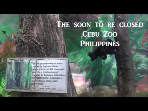 Cebu Zoo, Cebu City, Philippines