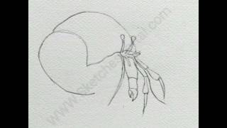 How to Draw a Hermit Crab In 8 Steps