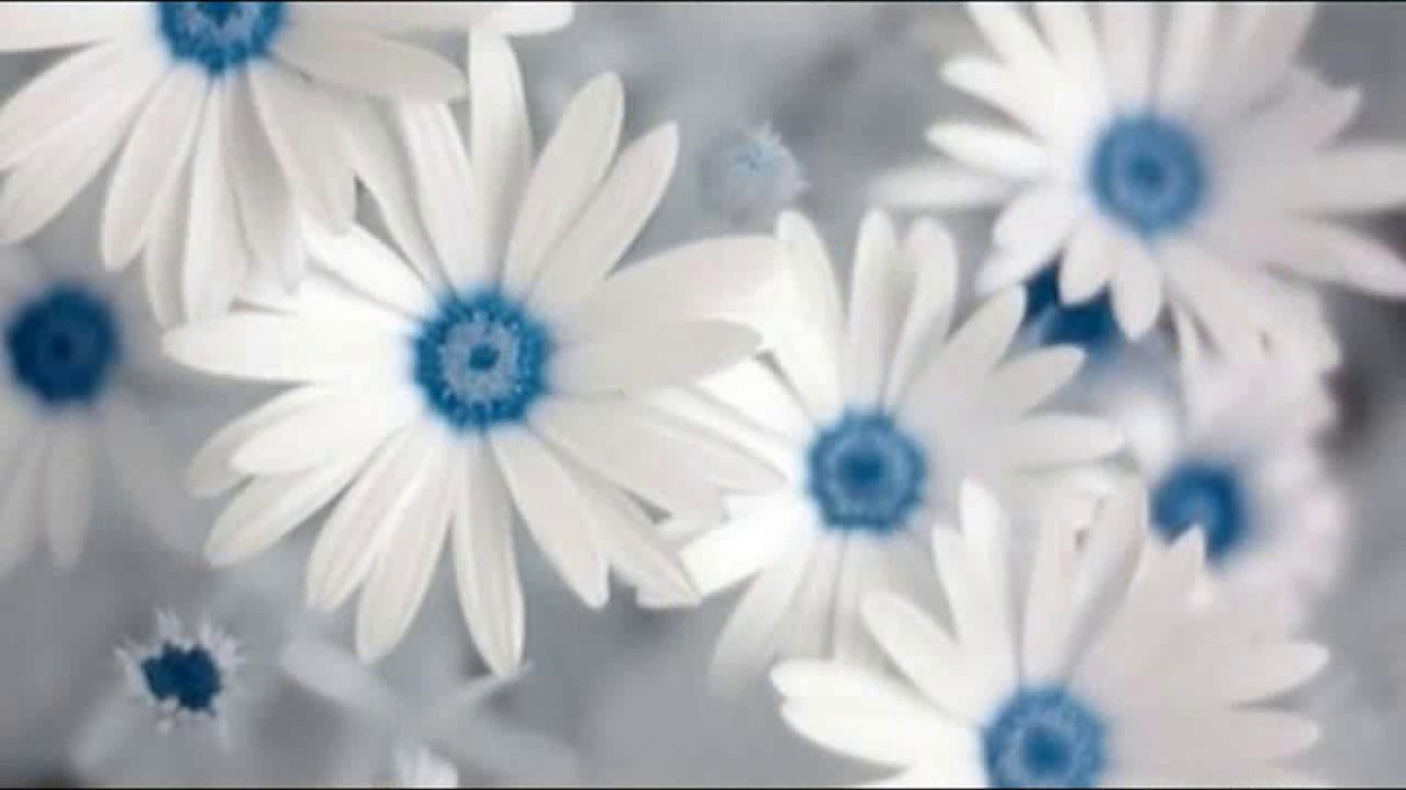 White Flowers Wallpaper Whatsapp Status Images Youtube